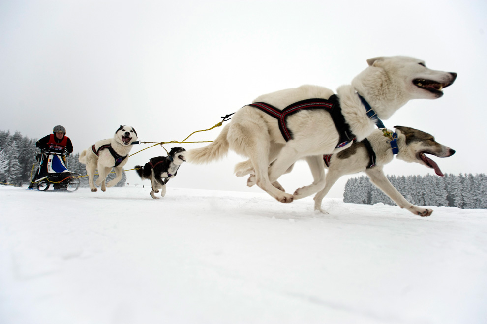 4 Ways to Get Started Dog Mushing - wikiHow